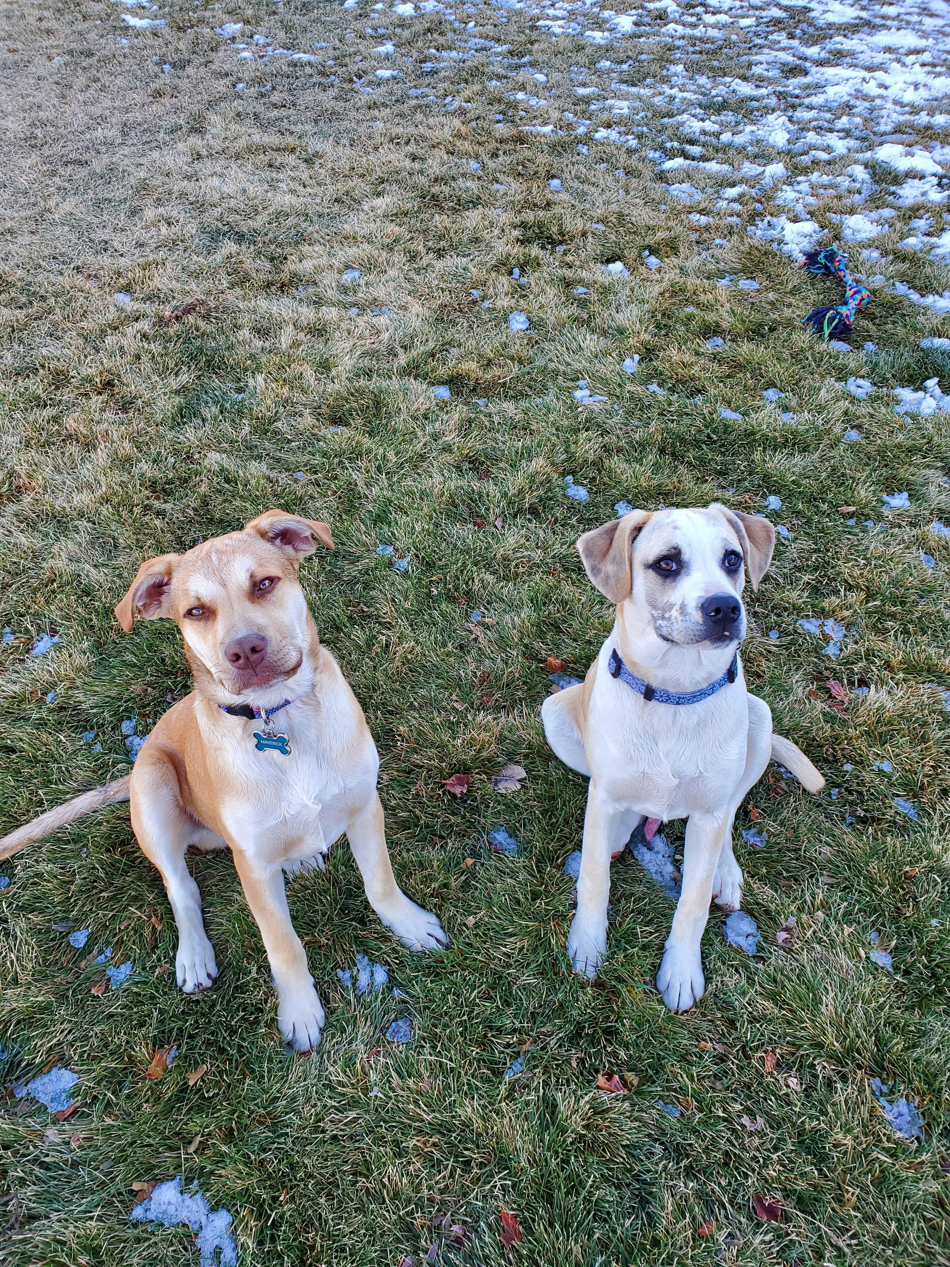 cj-affiliate-2021-pets-tucker-gitlin-maverick-and-goose